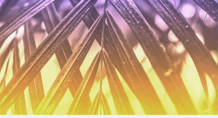 The Velvet Stripes – Mandrill Cuts 016 [Furious Mandrill Records]